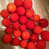 _strawberrymadrone
