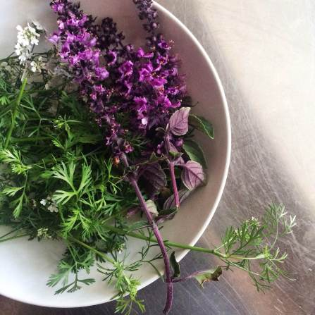 herbs from the garden