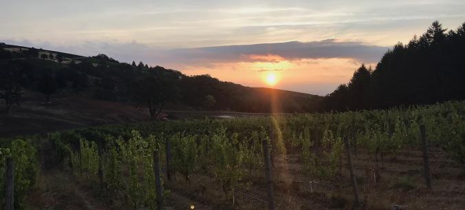 Perseid Wines - Maysara Vineyards sunrise
